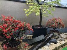 大阪市西成区 ベランダ庭園 施工施工後