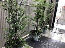 大阪市阿倍野区 植栽施工後
