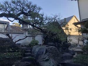 大阪市住吉区 帝塚山 W様邸 剪定管理の画像