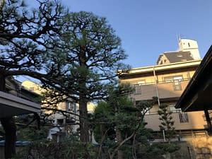大阪市住吉区 S邸 剪定管理 クロマツ剪定の画像