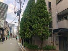 大阪市中央区 伐採 庭作り施工前