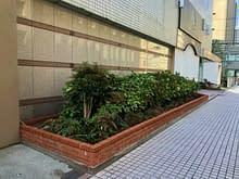 大阪市中央区 ホテル植栽工事 南国風 植栽施工前