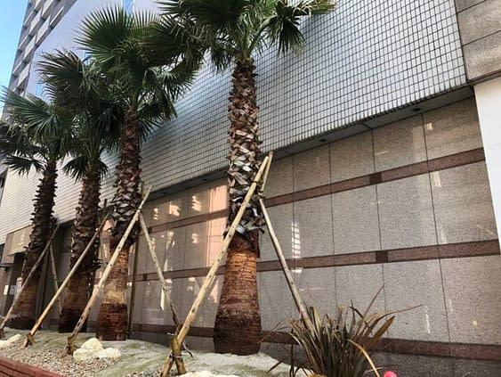 大阪市中央区 ホテル植栽工事 南国風 植栽施工後