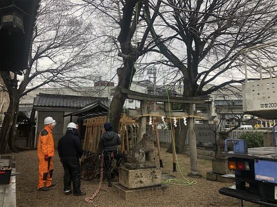 大阪市平野区 神社 強剪定 伐採工