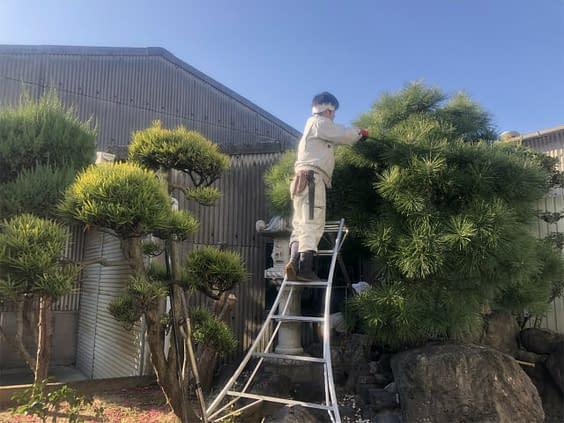 大阪市平野区 B様邸 庭リフォーム工事 庭木剪定