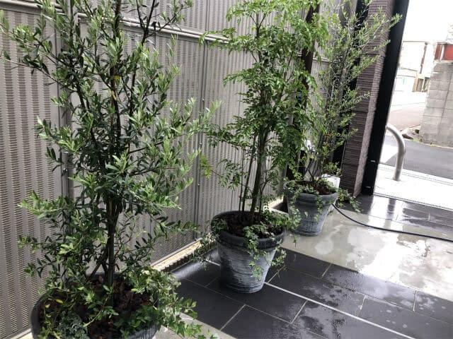 アンティークな植木鉢を使用した 植栽の画像