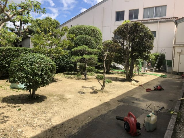大阪府私立高校 剪定作業の画像
